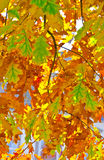 Autumn. Summer there comes the golden autumn Royalty Free Stock Photos