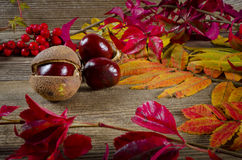 Autumn. Background with sheets and chestnuts Stock Photos