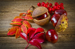 Autumn. Background with sheets and chestnuts Royalty Free Stock Photography