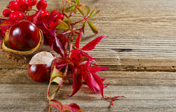 Autumn. Background with sheets and chestnuts Royalty Free Stock Images