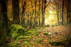 Autumn. Gerês N. P. Portugal in beautiful Autumn colors Royalty Free Stock Photo