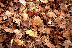 Autumn. Many colored leaf on the alley Stock Images