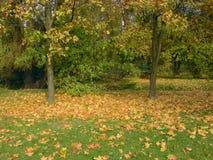 Autumn. In park stock image