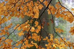 Autumn. Tree with golden leaves Stock Photo