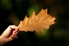 Autumn. An autumn leaf in one hand Stock Images