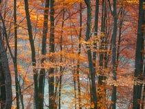 Autumn. Autumn in Carpathian forest Royalty Free Stock Photo