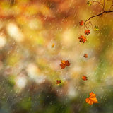 Autumn Royalty Free Stock Photos