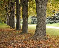 Autumn. Beautiful autumn scenery with yellow leaves Stock Photography