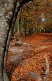 Autumn. Beautiful autumn in Geres - Portugal - Europe Stock Image