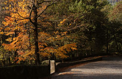 Autumn. Beautiful autumn in Geres - Portugal - Europe Stock Images
