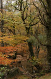 Autumn. Beautiful autumn in Geres - Portugal - Europe Royalty Free Stock Photography