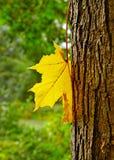 Autumn. Stock Photo