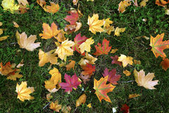 Autumn. Multi-colored fallen leaves on the grass in the park Royalty Free Stock Photo