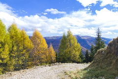 Autumn. Forrest road in sinaia mountains Stock Images