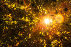 Autumn. In autumn the sun shines through falling leaves in the park Royalty Free Stock Image