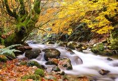 Autumn. Stock Image
