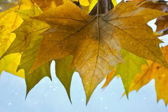 Autumn. Leaves, fallen, yellow and green Royalty Free Stock Images
