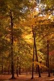 Autumn. Trees in autumn Royalty Free Stock Image