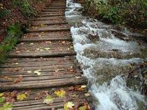 Autumn. Leaves in Plitvice lakes royalty free stock photos