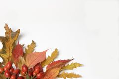 Autumn. Leaves & Rosehip border Royalty Free Stock Photo