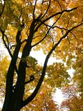 Autumn. Trees Stock Images