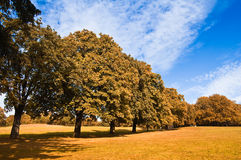 Free Autumn 3 Royalty Free Stock Image - 11116716