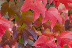 Free Autumn 3 Stock Image - 3233391