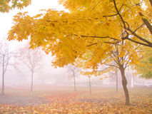 Autumn 3. Morning fog stock photos