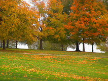 Autumn. Trees, open field royalty free stock images