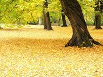 Autumn. Trees Stock Image