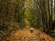 Autumn. Kid in the autumn forest Royalty Free Stock Photos