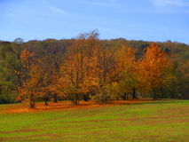Autumn. Trees, landscape stock photo