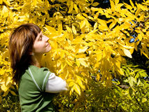 Autumn. The girl on a background of brightly yellow autumn foliage Royalty Free Stock Photo