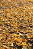Autumn. Beautiful autumn. Fall of the leaves Royalty Free Stock Photography