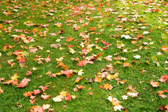 Autumn. Beautiful autumn. Fall of the leaves Royalty Free Stock Photo