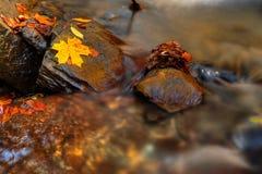 Free Autumn Royalty Free Stock Image - 3414346