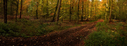 Autumn. Beautiful autumn mood in the forest Stock Photo