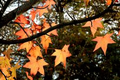 Autumn. Leaves Stock Images