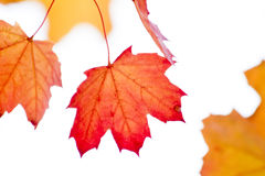 Autumn. Colors in dry leafs Royalty Free Stock Image