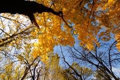 Free Autumn Royalty Free Stock Photography - 3625427