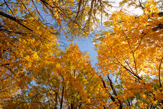 Free Autumn Stock Photo - 3625440