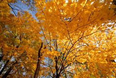 Free Autumn Royalty Free Stock Images - 3625479