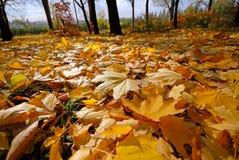 Free Autumn Stock Image - 3625561