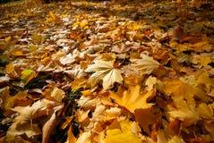 Free Autumn Royalty Free Stock Photos - 3625598