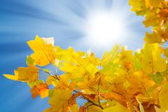 Free Autumn Royalty Free Stock Images - 3715649