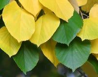 Autumn_4 Stockbild