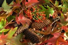 Autumn. Cornucopia - A colorful leaves Stock Photos