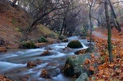 Autumn. Royalty Free Stock Image