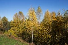 Autumn002 Fotos de Stock Royalty Free