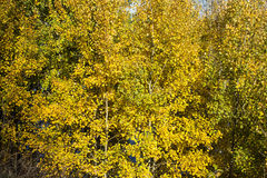 Autumn004 Fotos de Stock